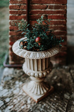 Pomegranate Plant Growing In Concrete Vase