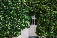 Ivy Covered Barn On . Luxury Country Estate