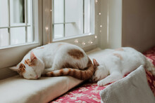 Cats Sleeping Together On Wind...
