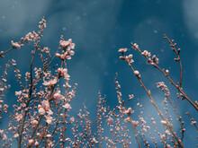 Dreamy Surreal Spring Blossom