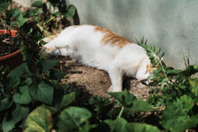 Adult Cat Napping In The Sun While Laying In Garden