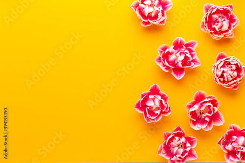 Fototapeta Spring Pink tulips on yellow background. Retro vintage style.