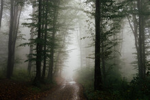 Road Through Enchanted Forest With Fog