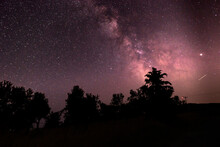 Milky Way And Stars In The Night With Tree Silhouettes