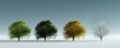 Trees in four seasons of the year - spring, summer, autumn and winter.