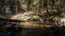 High Water Spring Rinver In Wo...