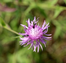 A Close View On The Small Purple Wildflower In The Field.