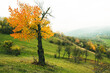 Beautiful autumn landscape with lone tree stands in a green field. Nature in Europe. Amazing place for travel.