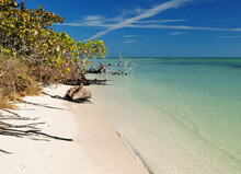 Tropical Beach On The Silver T...