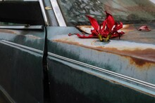 High Angle View Of Red Flower On Old Car