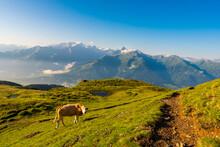 Mountain Green Summit Landscap...