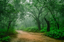 """View Of Misty Forest Along Walk Ways Of Matheran Hill Station  Near Mumbai On Sahyadri Range Of Western Ghat A """"hottest Hot-spots"""" Of Biological Diversity In The World & UNESCO World Heritage Site."""