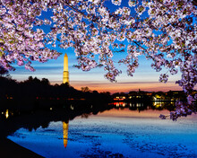 Washington DC, USA At The Tida...