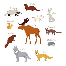 Forest Animals. Vector Color Drawing Silhouette Image Set.