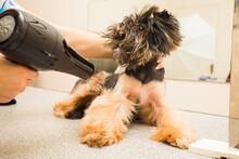Dog Hates Beauty Procedures An...