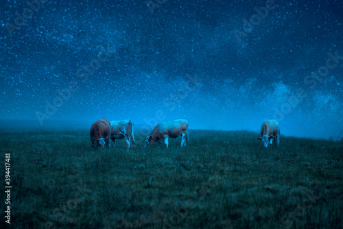 Valokuvatapetti Cows grazing in a field at night under a starry sky