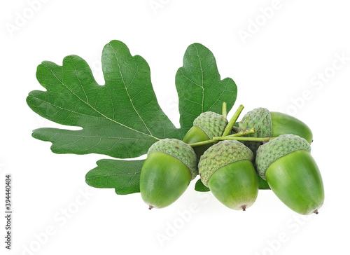Fototapeta Green oak leaf and green acorns isolated on a white background