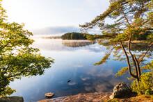 Trees At Lake, Sweden