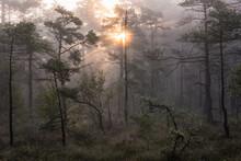 Sunrise Over Forest, Sweden