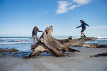 Kids Walking On Tree Stump On Beach, New Zealand