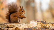 Wildlife Animal Background Clo...