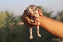Newly Born Cute Blind Kitten In Hand