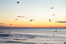 Seagulls Fly Over The Sea And ...