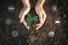 Cropped Hands Of Woman Planting Seedling On Field