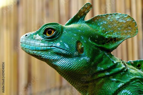 Głowa jaszczurki zielona na zbliżeniu Fototapet