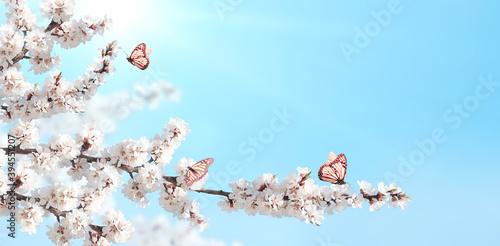 Obraz Sakura flowers and three monarch butterflies - fototapety do salonu