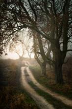 Dirt Winding Road Among Oaks. ...