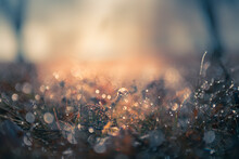 Frosted Plants In The Autumn Forest At Sunrise. Macro Image, Shallow Depth Of Field. Vintage Filter. Blurred Nature Background