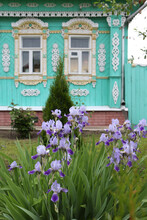 Summer Purple Flowers, Lilac Irises In Decoraive Garden In Suzdal Town, Russia. Russian Rural House With Ornamental Windows, Carved Frames, Village Nature. Violet Iris. Spring Iris Flower. Iris Bloom