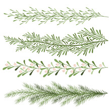 Set Of Christmas Plants. Sprigs Of Mistletoe, Coniferous Branches. Long Scenery. New Year Illustration