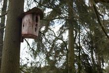 Ptasia Budka Lędowa Na Wysokim świerku
