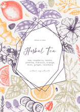 Trendy Vector Design With Hand Sketched Herbal Tea Ingredients. Colorful Herbs, Leaves, Flowers, Fruits Hand Drawings Background. Perfect For Recipe, Menu, Label, Packaging.