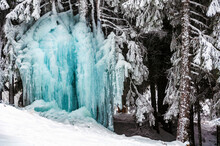 An Iced Tree At The Forest In ...
