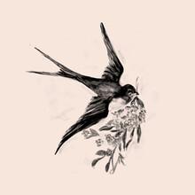 Aquarelle Hand Drawn Of Bird Vintage Illustration.