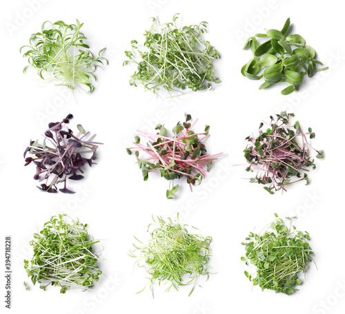 Fototapeta Set of different fresh microgreens on white background, top view obraz