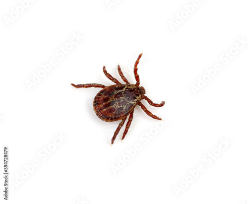 Tick isolated on white background.