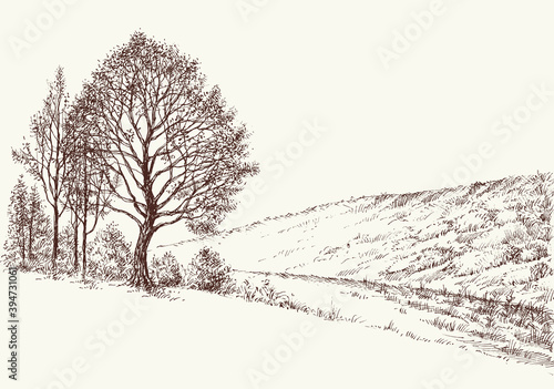 Fototapeta Trees on hills hand drawn landscape, beautiful nature image obraz