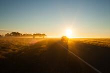 Farm Ute Driving Into Sun On C...