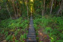 Journey Down Walker Creek Monsoon Forest Boardwalk