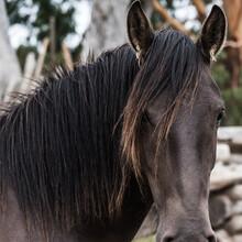 Close Up Portrait Horse Head