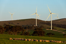 Wind Turbines On Hillside With Sheep In Foreground