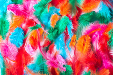 Multicolor Feathers Background...