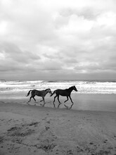 Horses And Sea