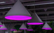 Round Phyto Lamps With Violet ...