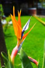 Flor Del Pájaro Con Fondo De ...