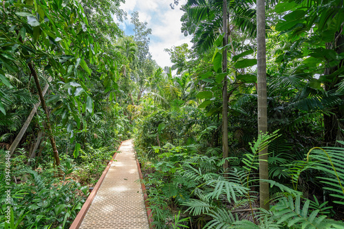 The rainforest in George Brown Botanical Gardens, Darwin, Northern Territory, Australia Wallpaper Mural